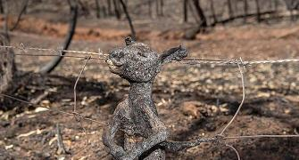 Burned alive: Hearbreaking images of Australian fires
