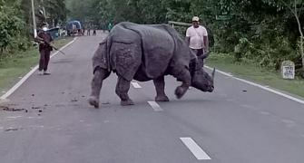 SEE: In Assam, Rhino takes a break on the road
