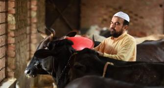 This Muslim runs a gaushala named after Lord Krishna
