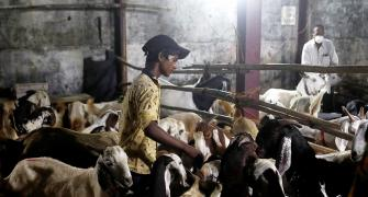'Bakri Eid is a day away and there is such confusion'