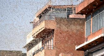 FAQ: Everything you need to know about locust attacks