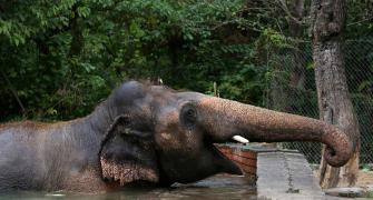World's 'loneliest elephant' is finally free