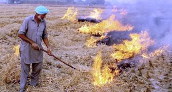 SC stays 1-man committee order on stubble burning