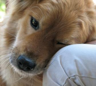 Pet therapy: How animals help us heal