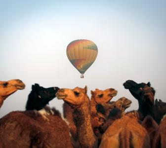 Travel bugs, it's time for the Pushkar camel fair!