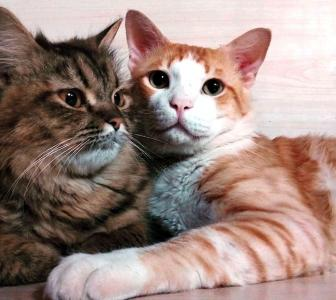 Awww! These cats are inseparable