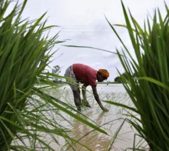 Agriculture grew 4% in FY19-20, what about this year?