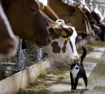 On eve of summer, milk cos feel the heat to raise prices