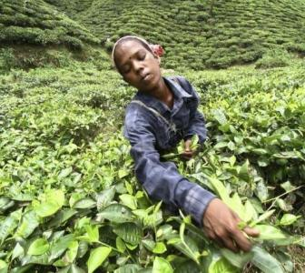 World has a new largest private tea producer