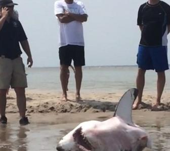 MUST SEE: Beachgoers helped rescue stranded shark
