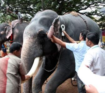 Why we shouldn't ban elephants in Kerala temples