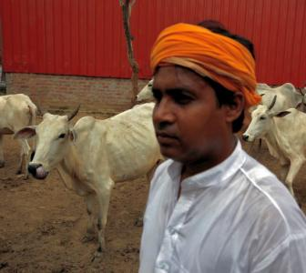 MAPPED: The tyranny of 'gau rakshaks' in India