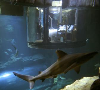 Would you dare sleep with sharks in this bedroom?