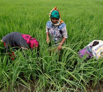 Budget: Bonanza for farmers & agriculture, Rs 10 lakh crore allocated