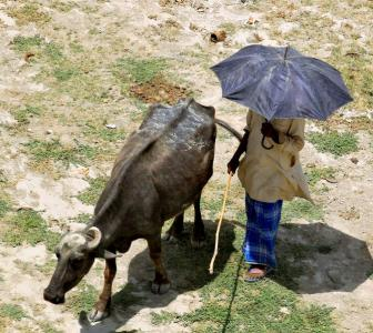 Heat wave in India claimed 700 lives in 2016