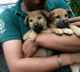 Kerala floods: Rescue workers risk lives to save stranded pets