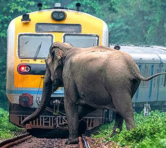 SNAPPED! When an elephant missed a train by inches