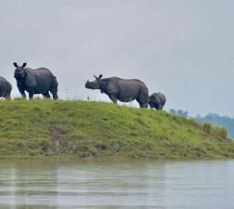PHOTOS: Wildlife at Kaziranga struggles to stay afloat