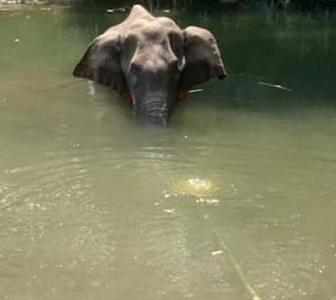 Kerala elephant death: SC hears animal rights plea