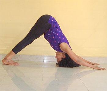 building superstamina with yogic animal poses  rediff