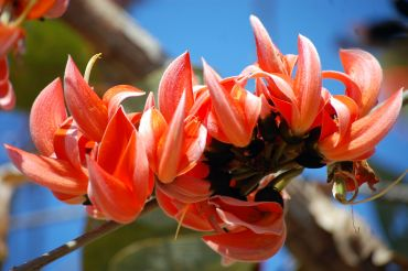 Unusual summer pics: Taking the plunge! - Rediff Getahead Palash Flowers Images