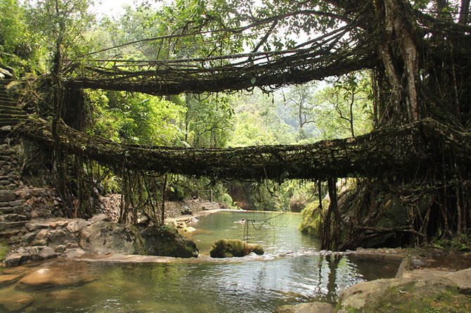 Living Root Bridges of Cherrapunji, Meghalaya