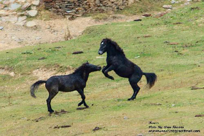 Wild horses indulge in a friendly banter