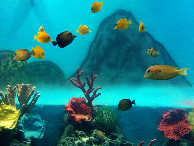 Mumbai Gets Its Aquarium Back But Don T Expect A World Class One