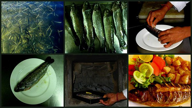 Trout in Manali