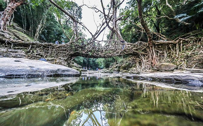 The Living root bridge of Meghalaya
