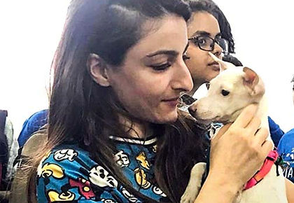 Latest News from India - Get Ahead - Careers, Health and Fitness, Personal Finance Headlines - So cute! These celebs adopted strays