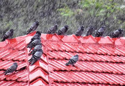 Monsoon pix: Look who's having fun!