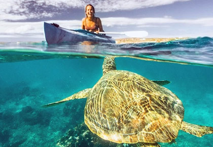 Latest News from India - Get Ahead - Careers, Health and Fitness, Personal Finance Headlines - Want to swim with turtles?