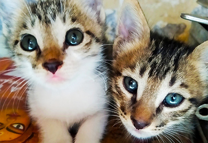 Pet pics: Tom and Jerry, the adorable cats