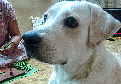 Meet the dog who understands Bengali