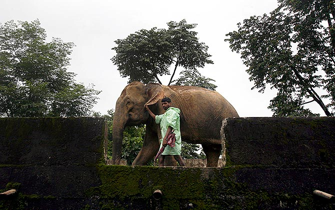 Arunachal: Where Elephants Roam at 10,000 feet