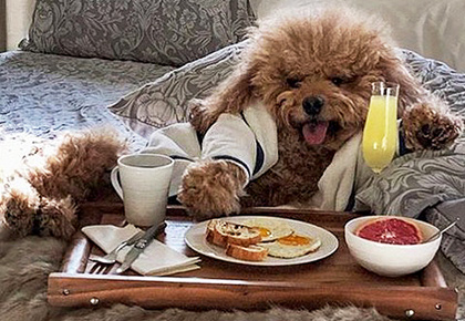 Wow! This dog lives a celebrity's life