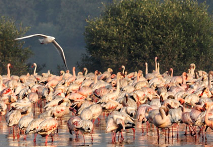 SEE: Stunning flamingos take flight