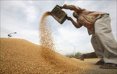 A worker sifts wheat at a grain market in Chandigarh.