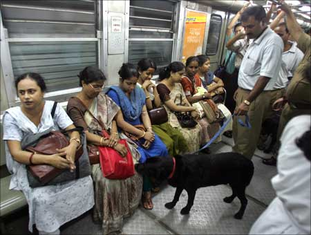 A sniffer dog of Railway police checks passengers' bags inside compartment of Kolkata Metro.