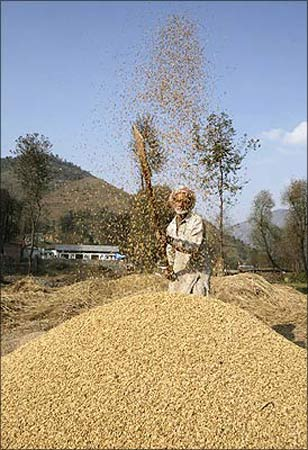 A farmer works in a field, sifting the wheat from the chaff.