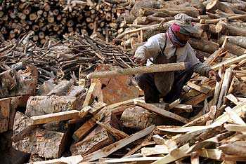 A worker prepares firewood for a biomass gasifier power plant in Gosaba.