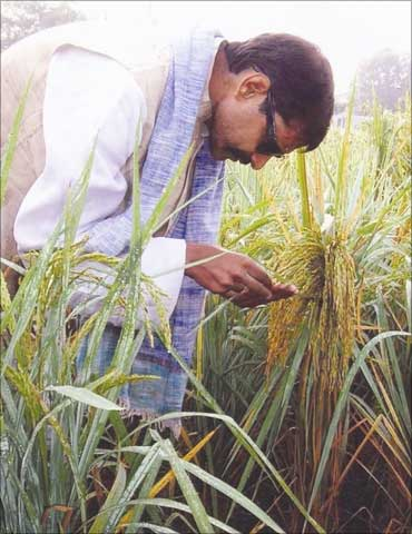 Prakash Singh at his field.