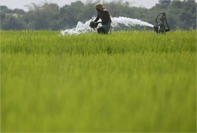 A farmer works in a paddy field in Dhinkia village.