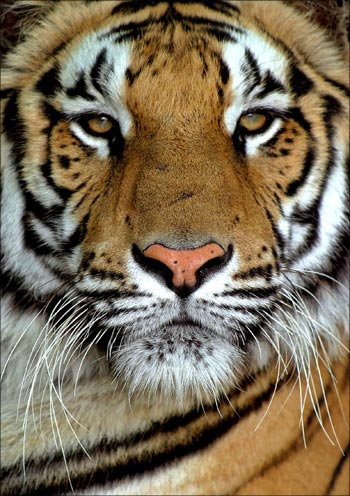 SPECIAL How India became a ROARING Asian tiger Rediff