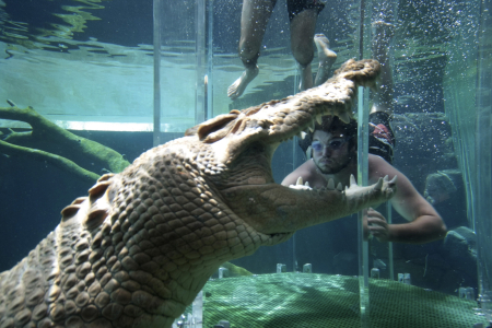 A tourist dives in a cage partially immersed in a crocodile pen in Crocosaurus Cove in Darwin.