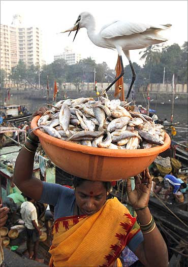 A crane eats a fish from a tub of fish at a wholesale market at a fish harbour in Mumbai.