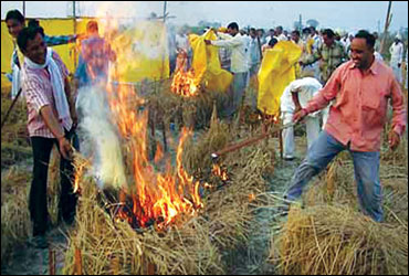Bharatiya Kisan Union workers set fire to fields of transgenic rice in Rampura village.
