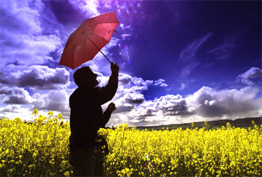 A man shelters under an umbrella in a field of oilseed.