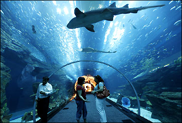 Aquarium at Dubai Mall.